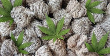 10 amazing things you can use hemp for