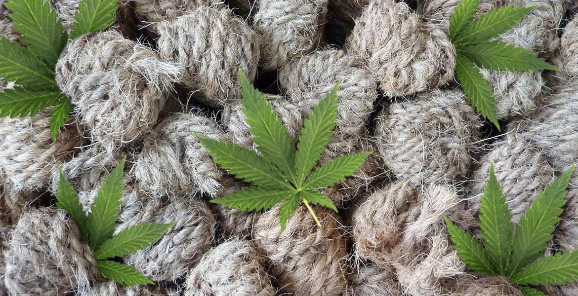 What Are the Uses of Hemp?